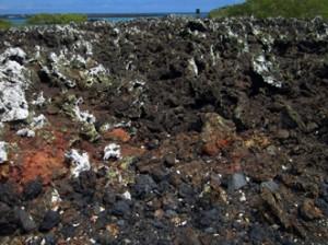 IMG 5756-300x224 in ... Galapagos!