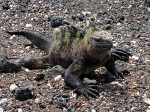 IMG 5757-300x224 in ... Galapagos!