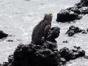 IMG 5758-300x224 in ... Galapagos!