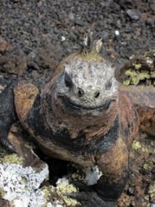 IMG 5763-224x300 in ... Galapagos!