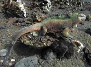 IMG 5767-300x224 in ... Galapagos!