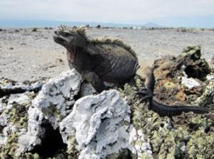 IMG 5774-300x224 in ... Galapagos!