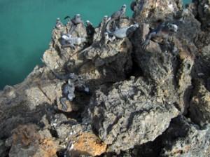 IMG 5780-300x224 in ... Galapagos!