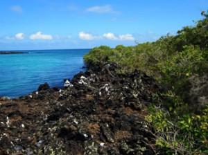 IMG 5782-300x224 in ... Galapagos!