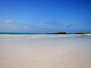 IMG 5797-300x224 in ... Galapagos!