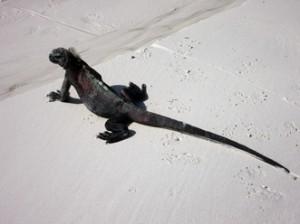 IMG 5806-300x224 in ... Galapagos!