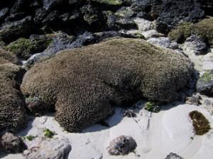 IMG 5808-300x224 in ... Galapagos!