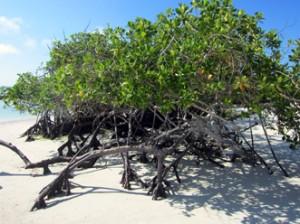 IMG 5819-300x224 in ... Galapagos!