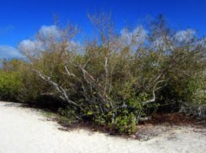 IMG 5821-300x224 in ... Galapagos!