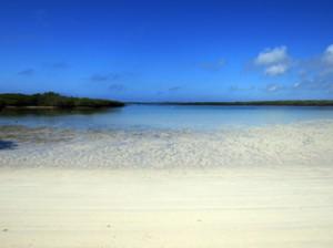IMG 5823-300x224 in ... Galapagos!