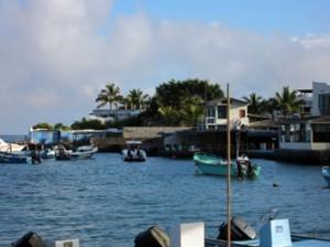 IMG 5848-300x224 in ... Galapagos!